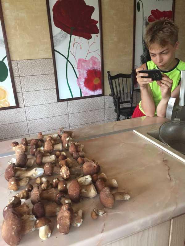 белые грибы в сургутском районе